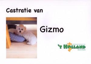 Gizmo 12