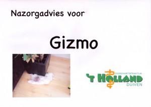 Gizmo13