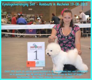 Mechelen hondenshow 2013