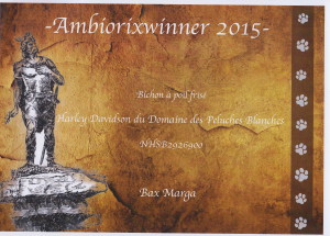Sifu ambioriwinner 2015
