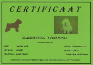 diploma shauni