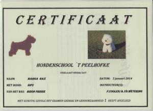gg1 Diploma Sifu