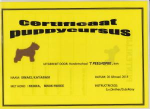 puppy Diploma Nedina