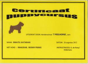 puppy Diploma Shakinah