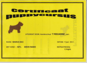 puppy Diploma Sifu 1