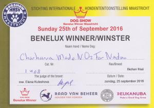 beneluxe-nedina-2016